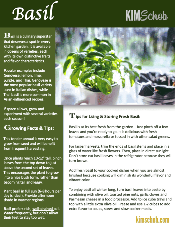 Basil- 15 Popular Culinary Herbs Easy Tips & Ideas | kimschob.com