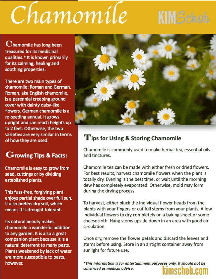 Chamomile- 15 Popular Culinary Herbs Easy Tips & Ideas | kimschob.com