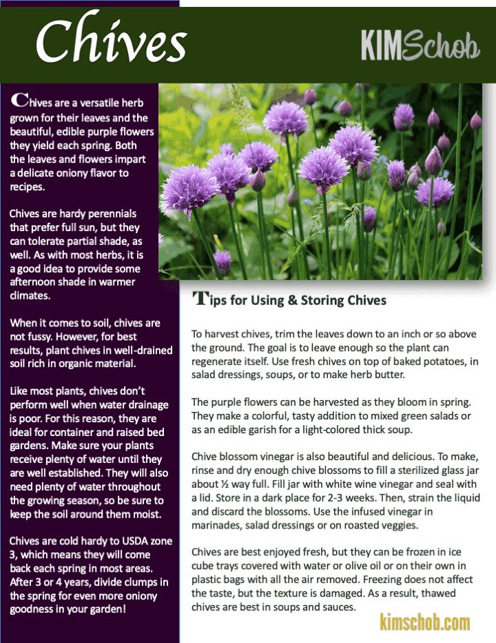 Chives-15 Popular Culinary Herbs Easy Tips & Ideas | kimschob.com