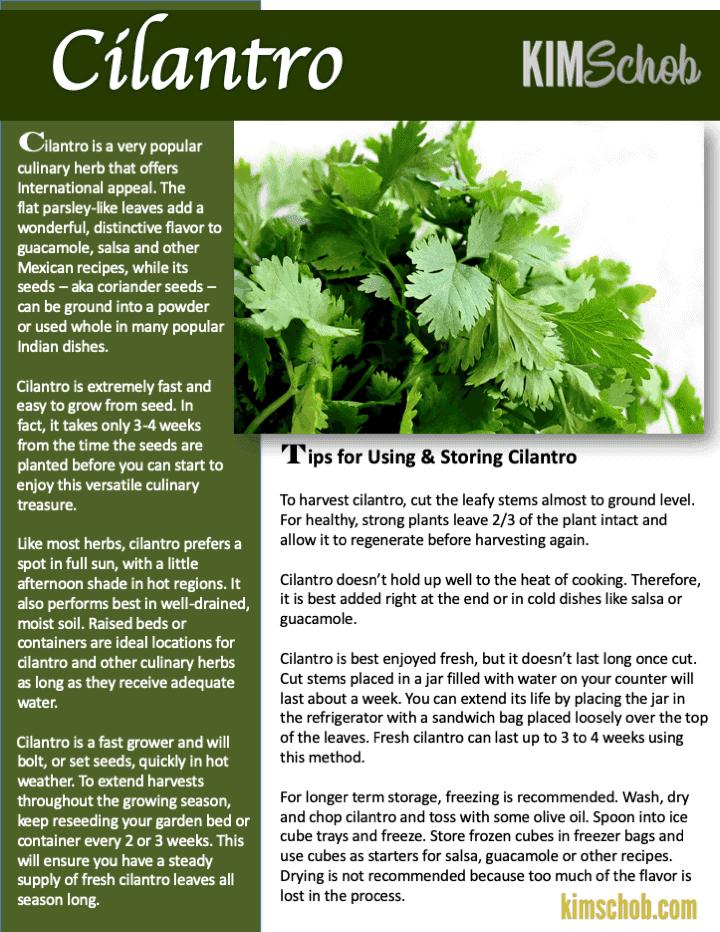 Cilantro-15 Popular Culinary Herbs Easy Tips & Ideas | kimschob.com