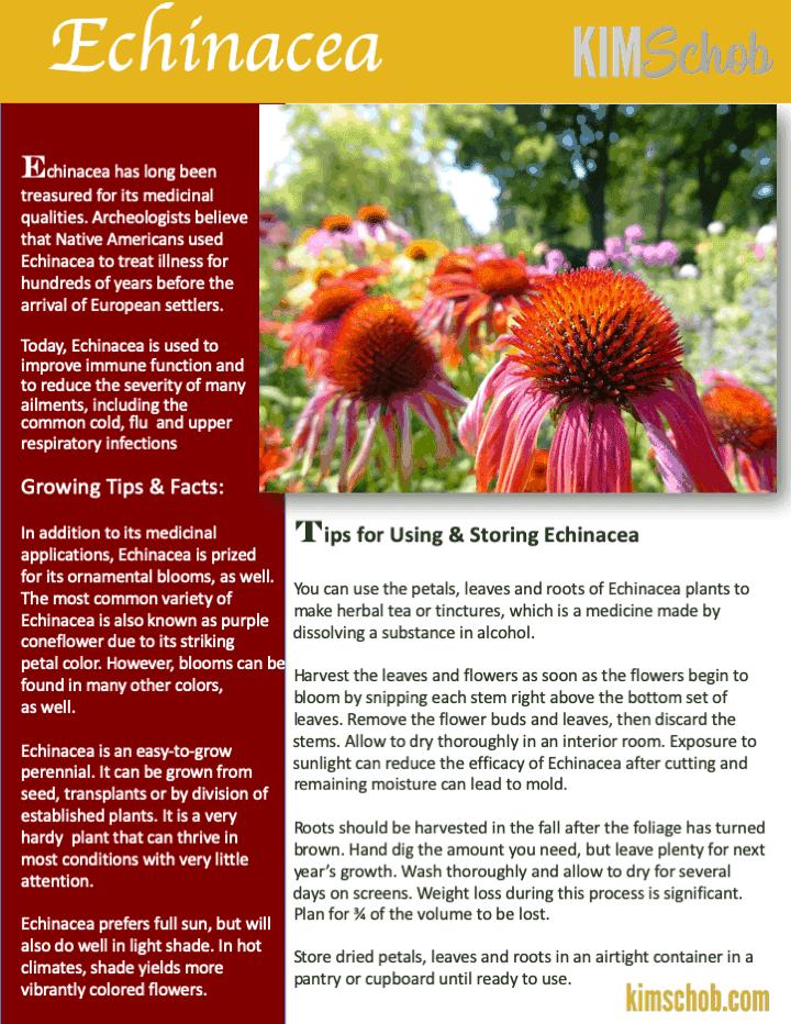 Echinacea-15 Popular Culinary Herbs Easy Tips & Ideas | kimschob.com
