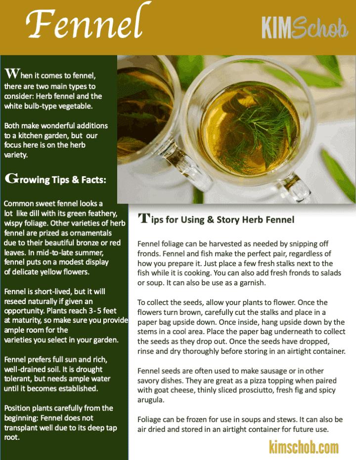 Fennel-15 Popular Culinary Herbs Easy Tips & Ideas | kimschob.com