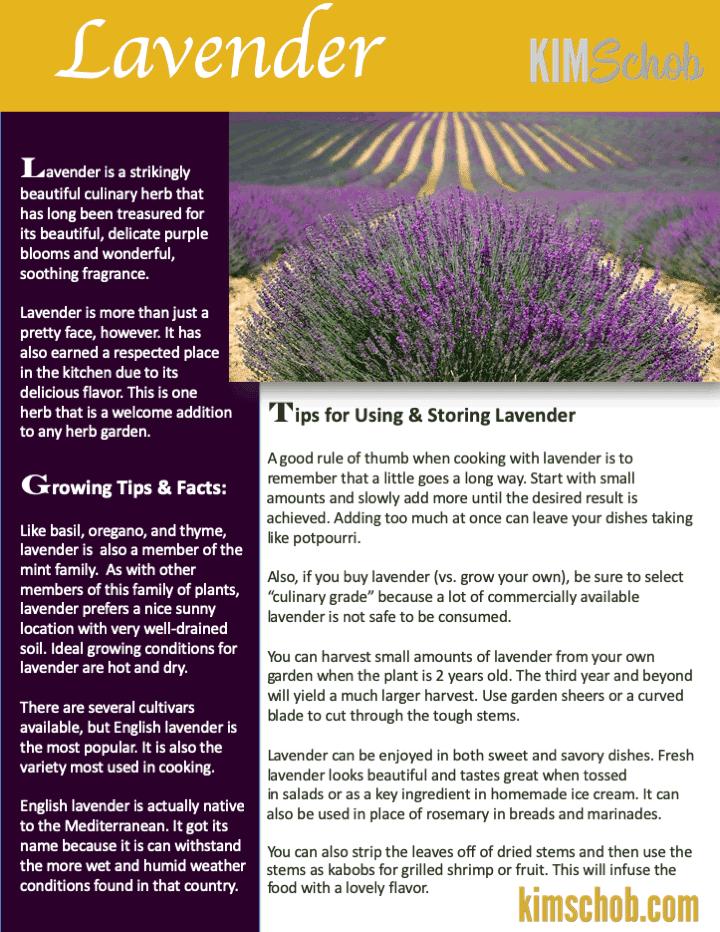 Lavender-15 Popular Culinary Herbs Easy Tips & Ideas | kimschob.com