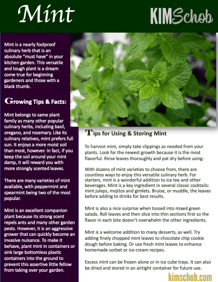 Mint-15 Popular Culinary Herbs Easy Tips & Ideas | kimschob.com