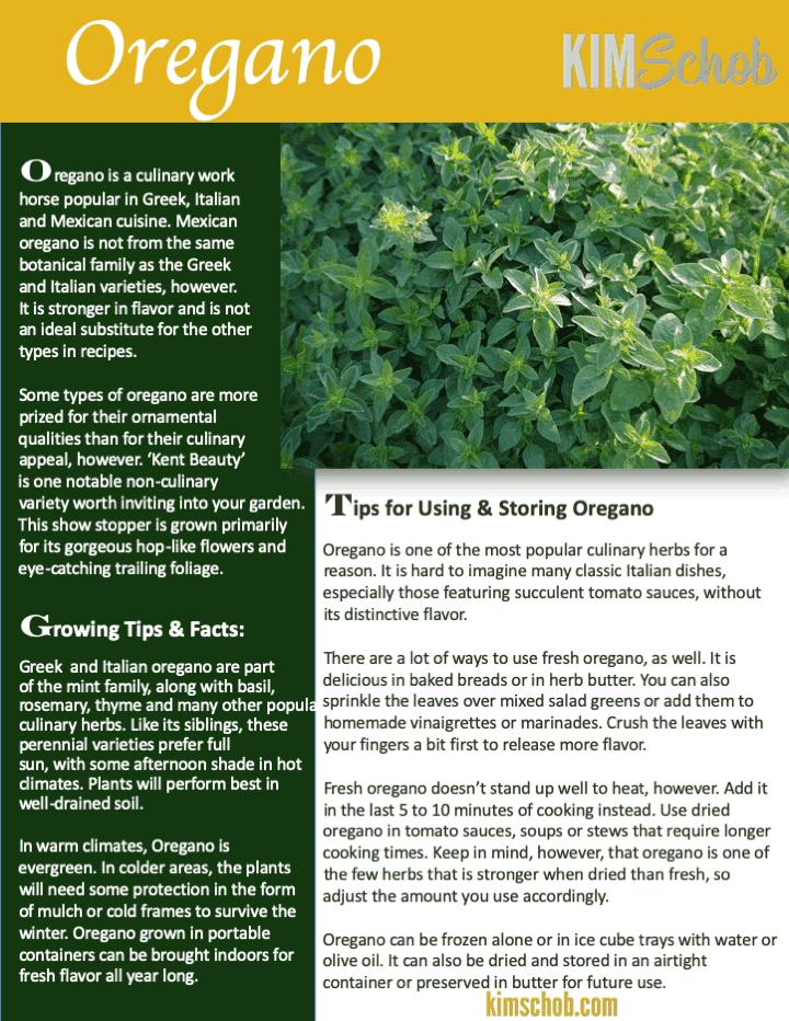 Oregano-15 Popular Culinary Herbs Easy Tips & Ideas | kimschob.com