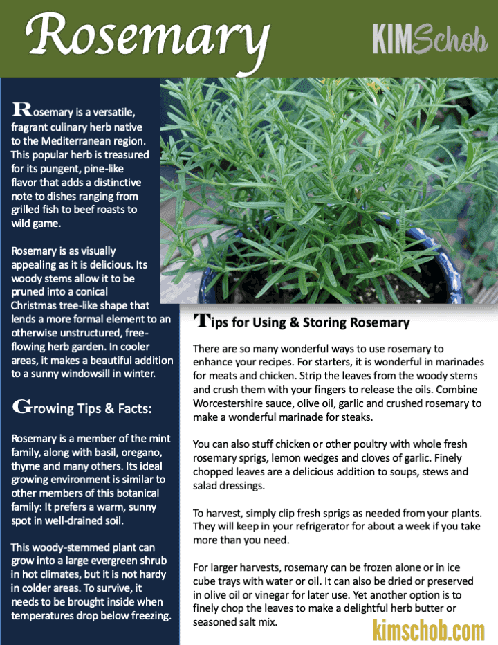 Rosemary-Common Cooking herbs | kimschob.com