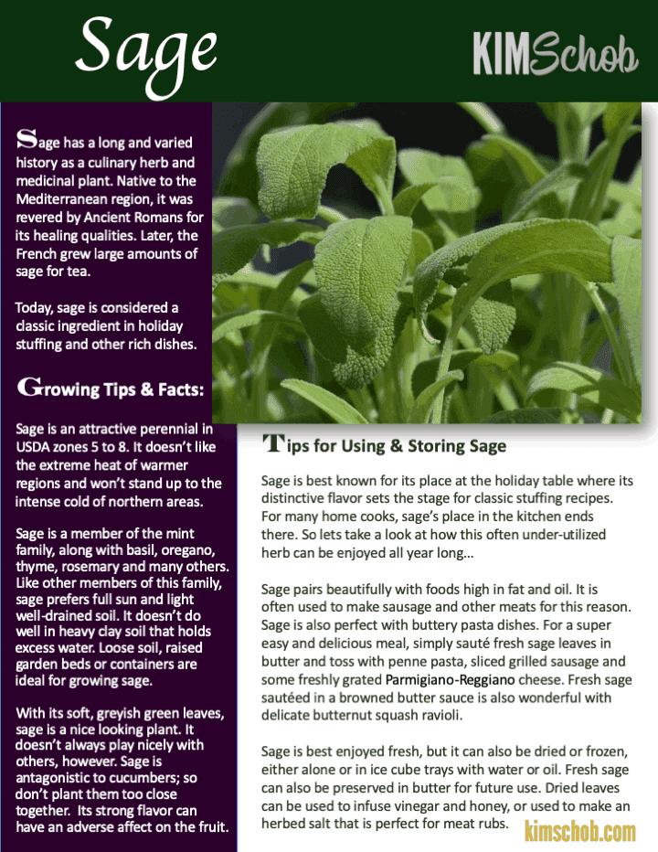 Common Cooking Herbs - Sage | kimschob.com