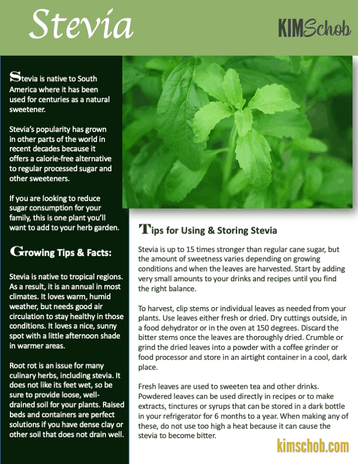 Stevia-15 Popular Culinary Herbs Easy Tips & Ideas | kimschob.com