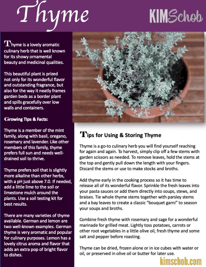 Thyme-15 Popular Culinary Herbs Easy Tips & Ideas | kimschob.com