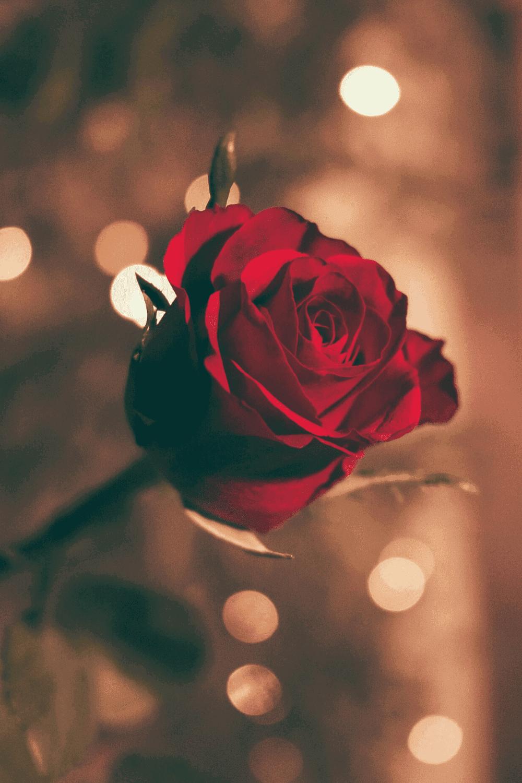 How to Make Valentine's Day Special | kimschob.com