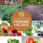 15-Common-Cooking-Herbs-and-How-to-Use-Them | kimschob.com